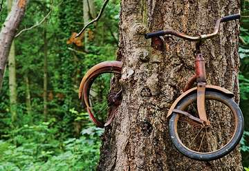 Bicycle Swallowed by a Tree
