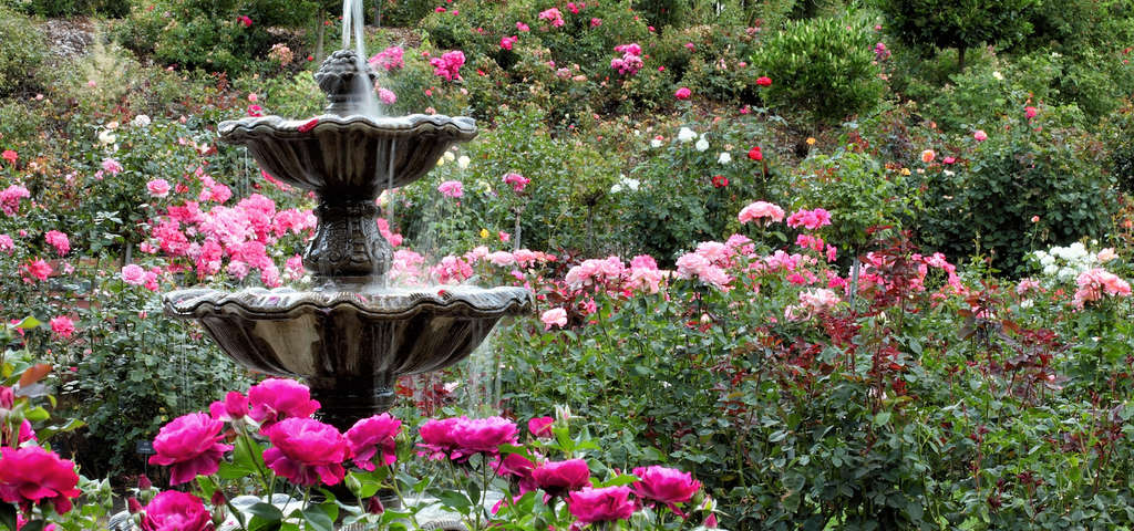 International Rose Test Garden, Portland | Roadtrippers