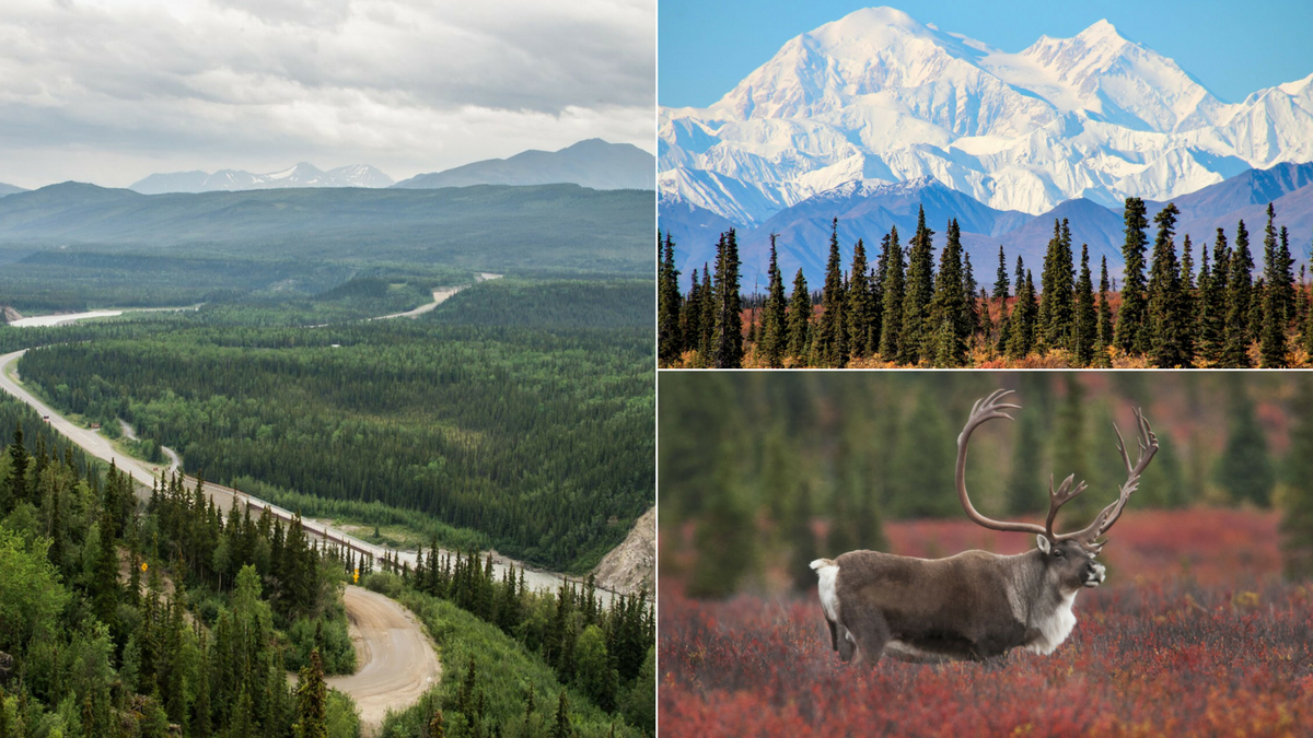 The Ultimate Road Trip Guide to Denali National Park
