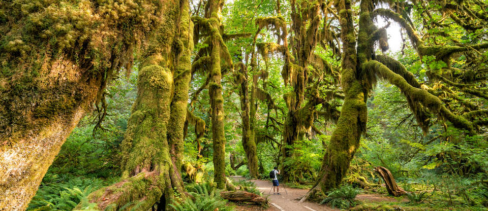 Olympic National Park is 1,400 sq miles of primeval beauty